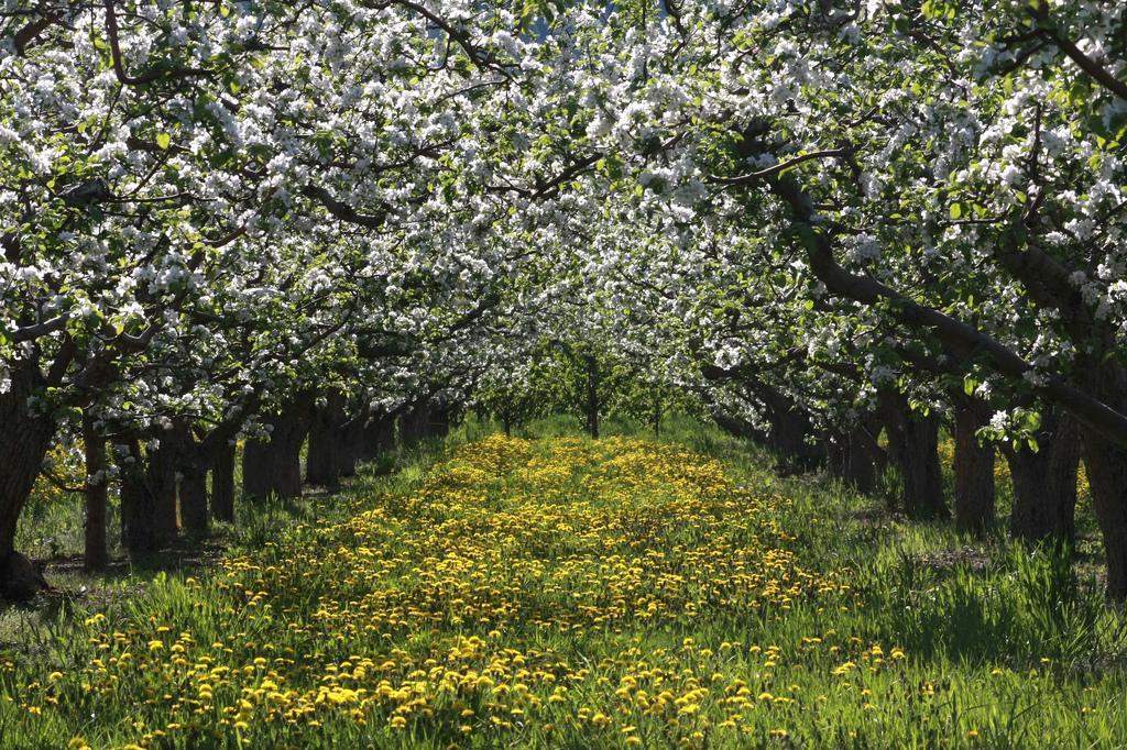 Сады Оканагана