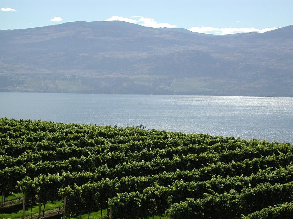 Виноградники на берегу озера Оканаган