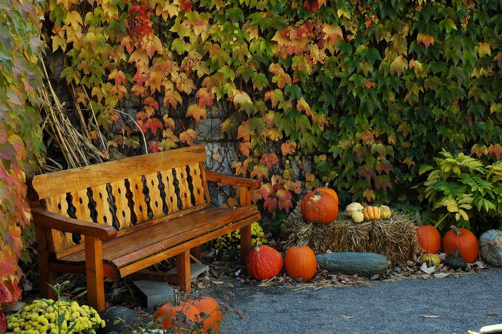 Осень в Монреале