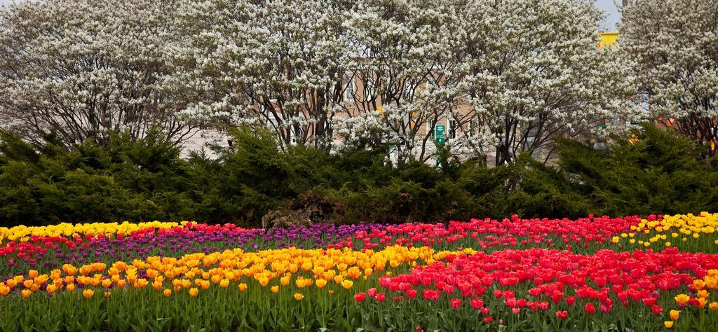 Фестиваль тюльпанов в Оттаве