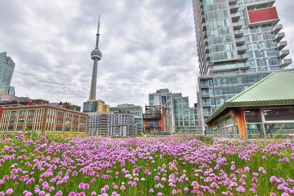 Зеленые крыши Торонто