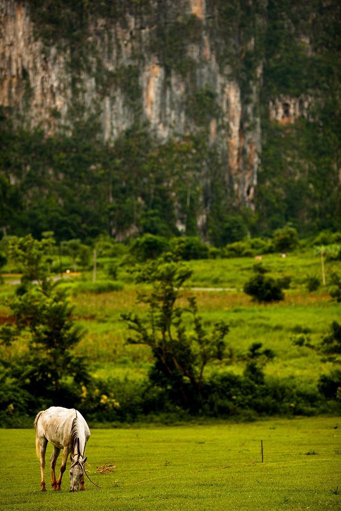 Лошадь на пастбище, Виньялес