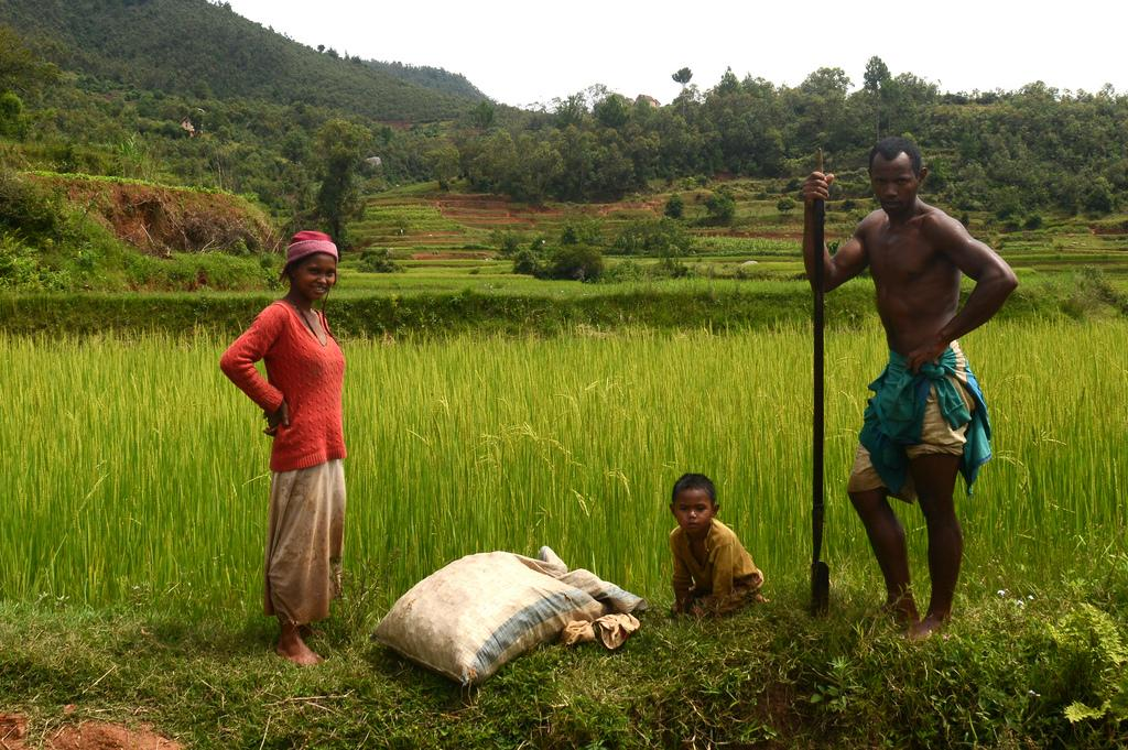 Семья обрабатывает рисовое поле