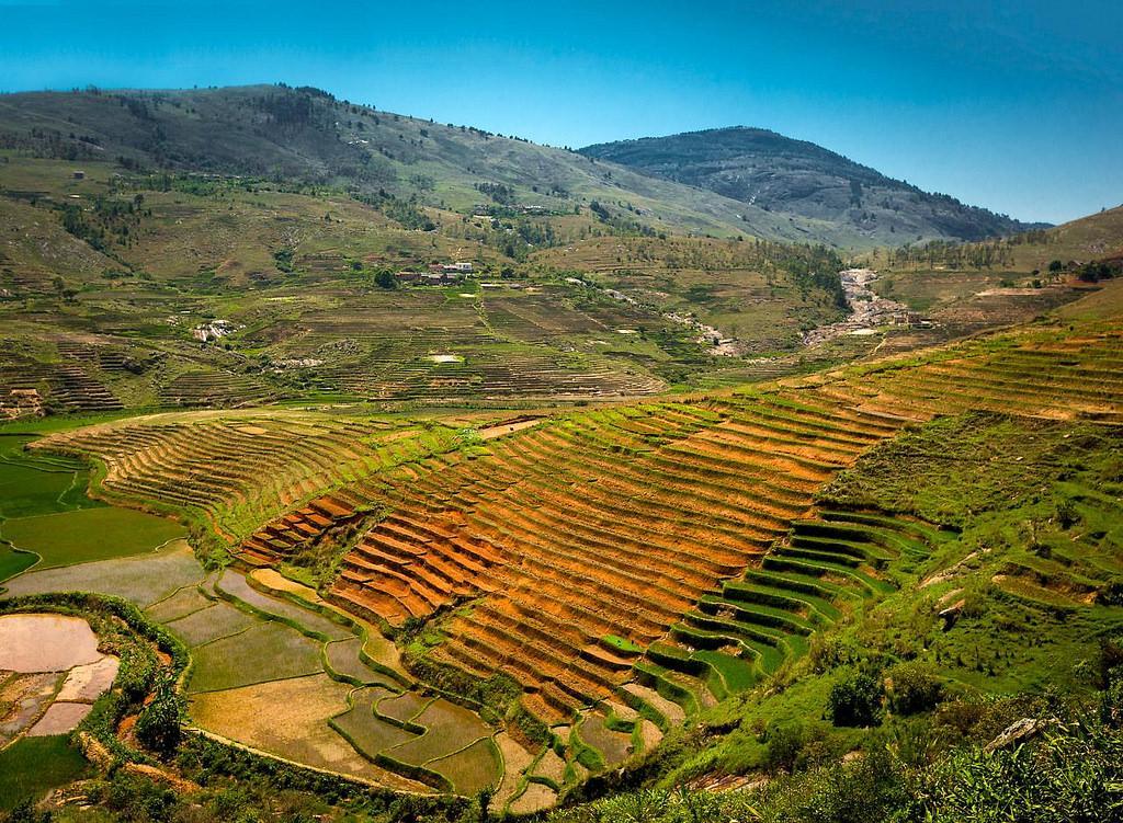 Террассы рисовых полей