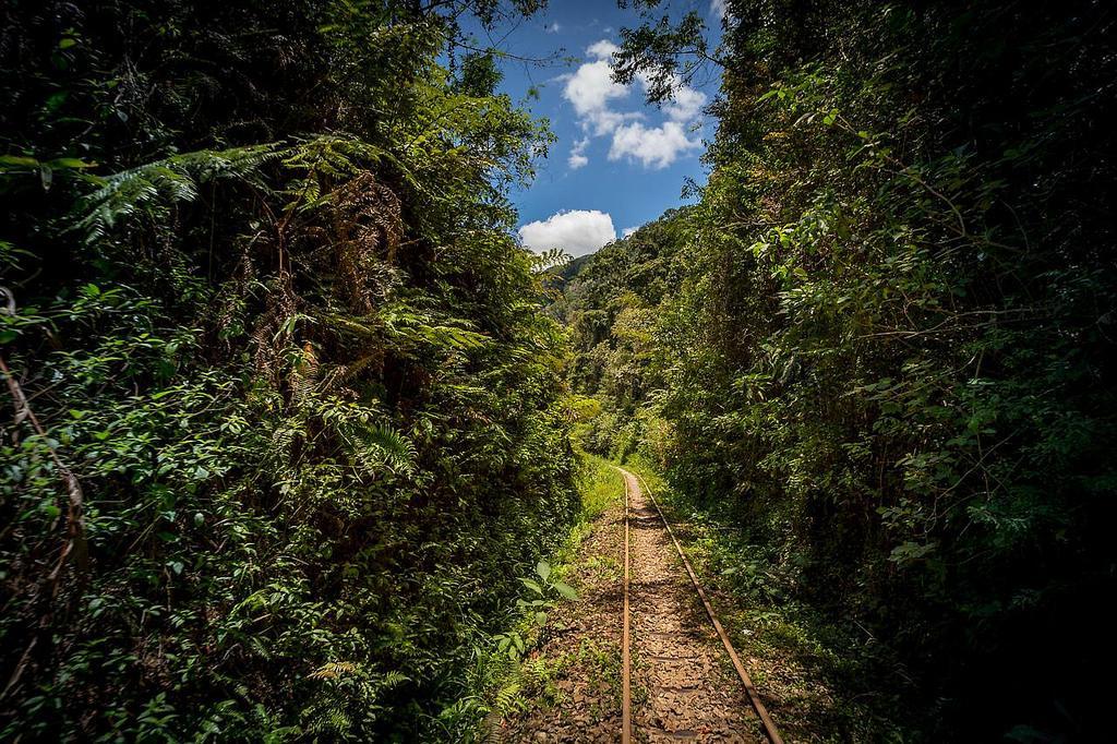 Железная дорога в джунглях