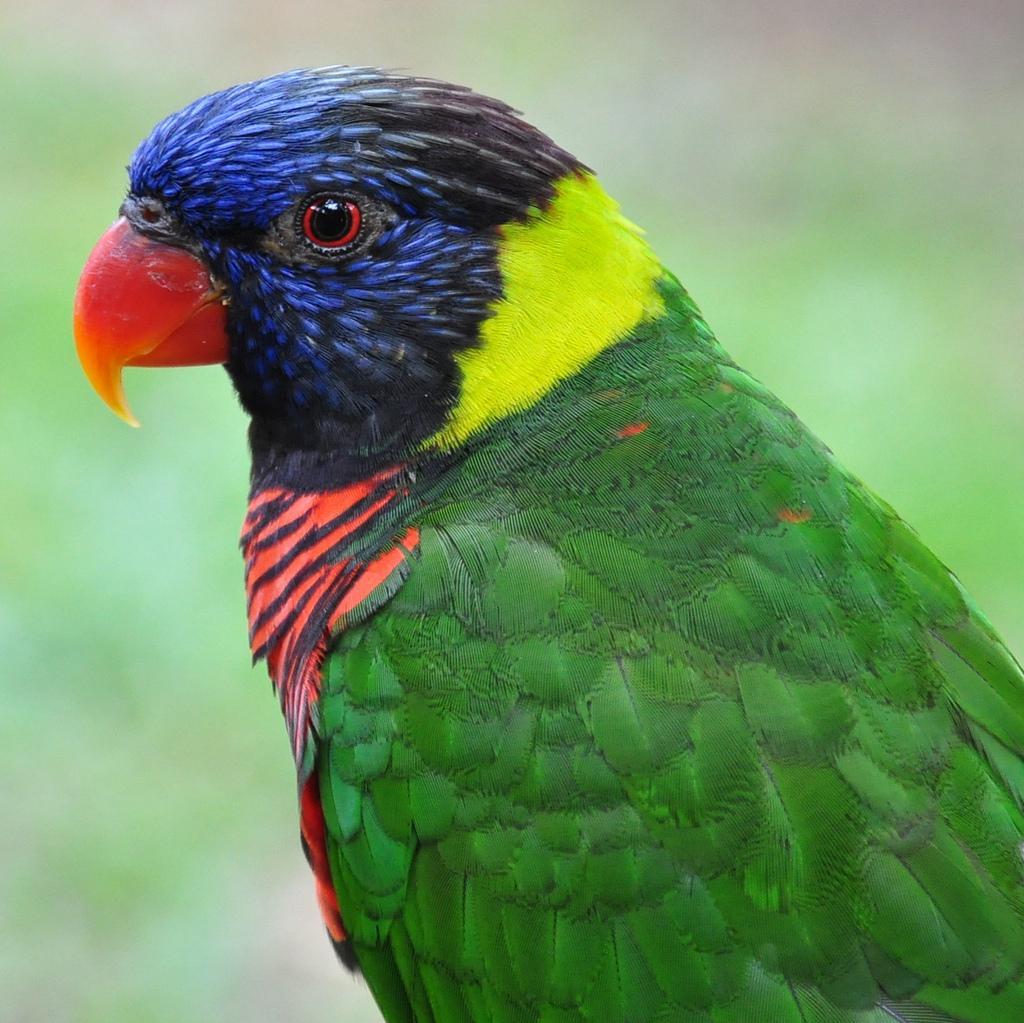 Попугай из парка птиц