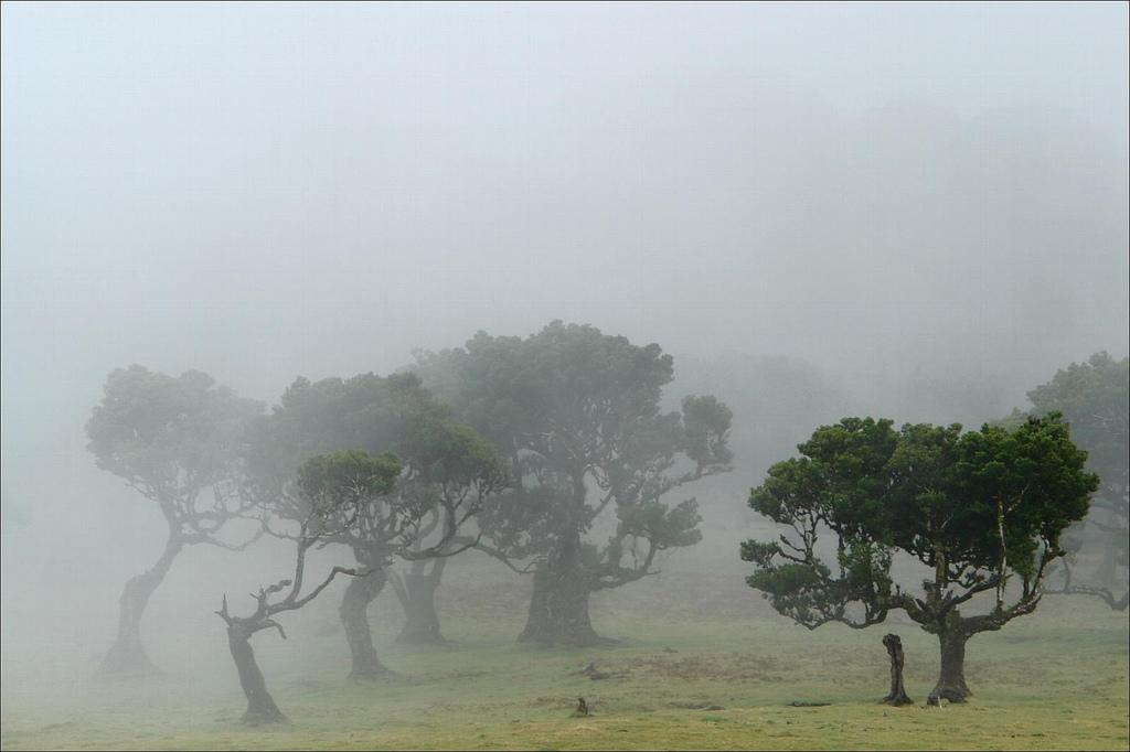Природа Мадейры