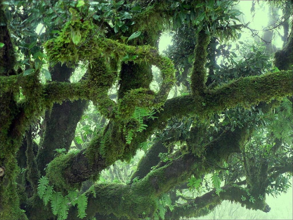 Девственные леса Мадейры