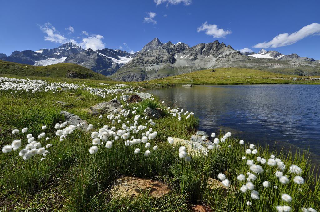 Швейцарский луг