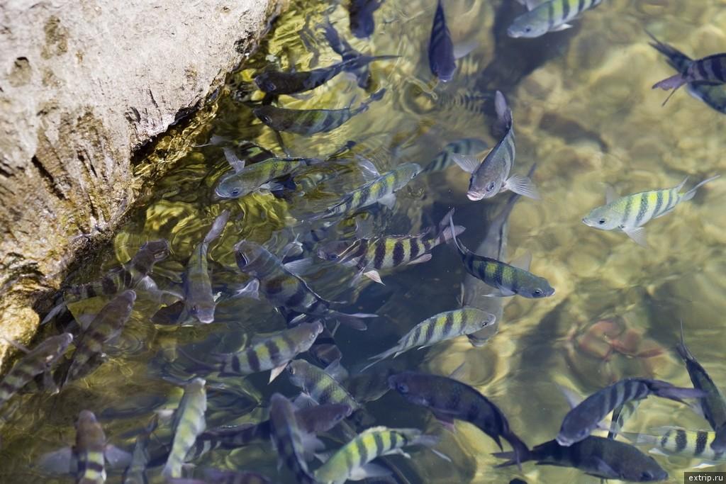 Голодные рыбы